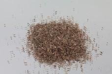 Vogelknöterichkraut 50g