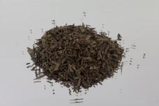 Grüner Tee Sencha 100g